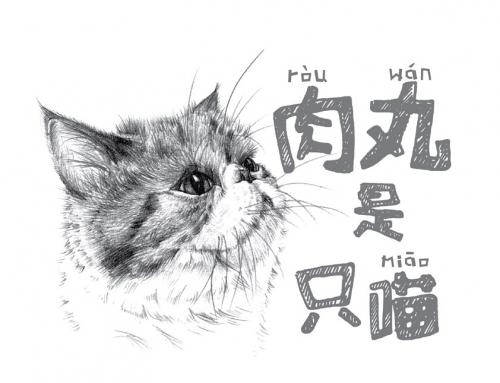 2016创意台历设计欣赏-肉丸是只猫